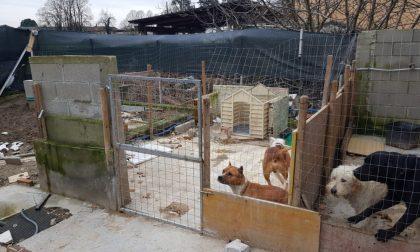 Le foto della casa degli orrori a un passo da Milano: cani, conigli e cardellini costretti a vivere nelle proprie feci