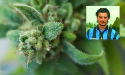 Coltivava 106 piante di marijuana in un casolare: arrestato l'ex calciatore Luigi Sartor