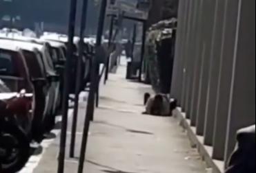 Si accoppiano sul marciapiede in pieno giorno a Milano e il video diventa virale
