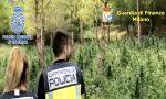 Dalla Spagna all'hinterland milanese: maxi traffico di droga, una delle basi a Rozzano