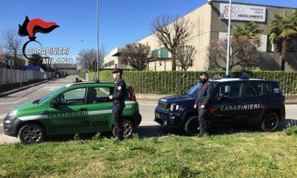 Moria di gabbiani nella zona industriale, intervengono i carabinieri