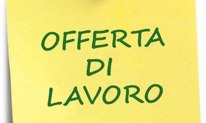 Offerta di lavoro: il M5S Lombardia cerca social media manager