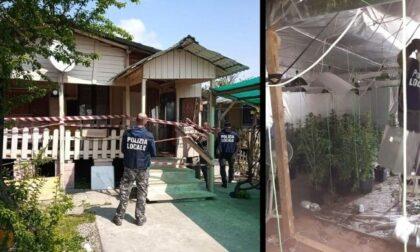Coltiva 180 piantine di marijuana nel campo nomadi: arrestato
