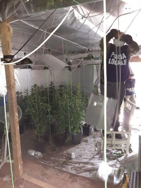 marijuana campo nomadi arrestato