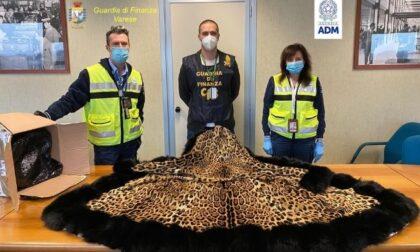 Dalla pelliccia di giaguaro alla borsa di alligatore: sequestri a Malpensa